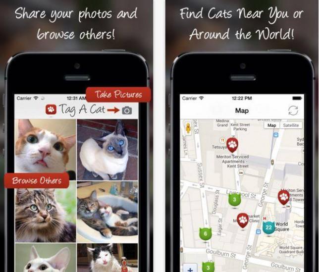 世界中の猫を閲覧できる!猫用のTinder風アプリ「Tag A Cat」が面白い